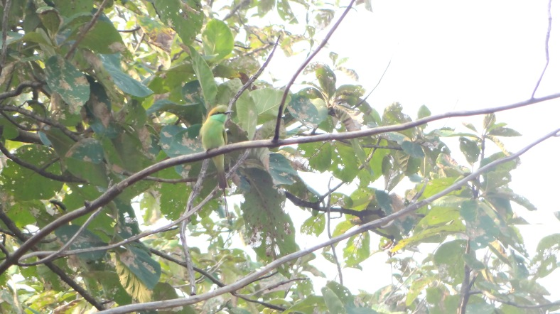 Parekeet on the tree