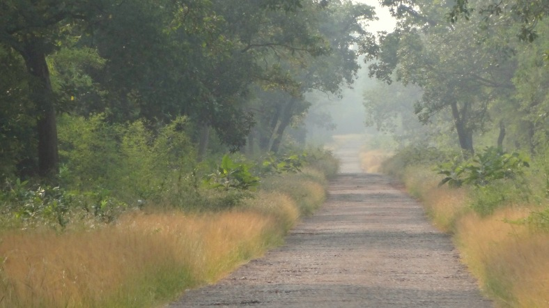 misty pathways