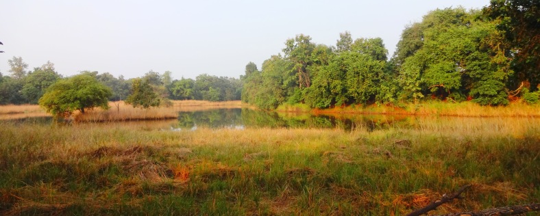 Jungle landscapes