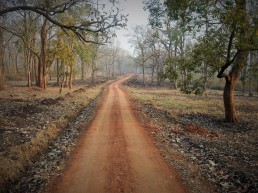 The eerily beautiful roads of the forest