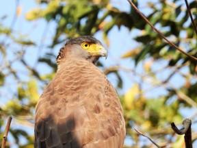 The serpent eagle - giving attitude