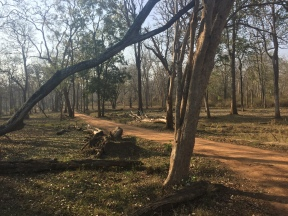 The calming charm of nature at Kabini